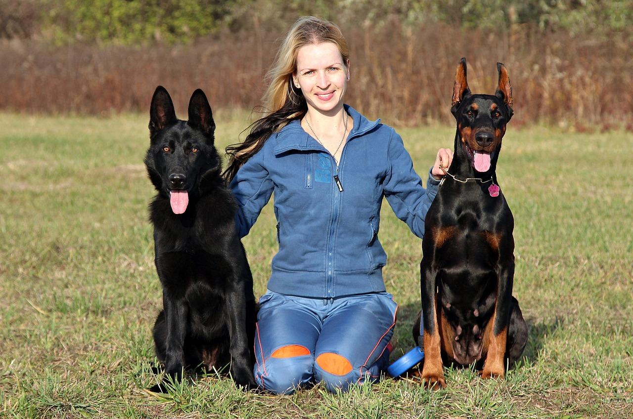 Adopcja psa obronnego – jak się za to zabrać?