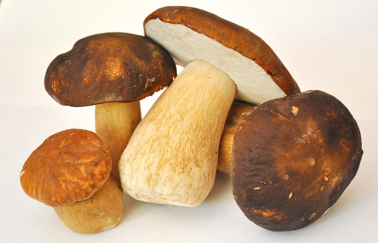 Prosta zupa grzybowa z suszonych grzybów. Wigilijna kolacja – zupa grzybowa z mrożonych borowików